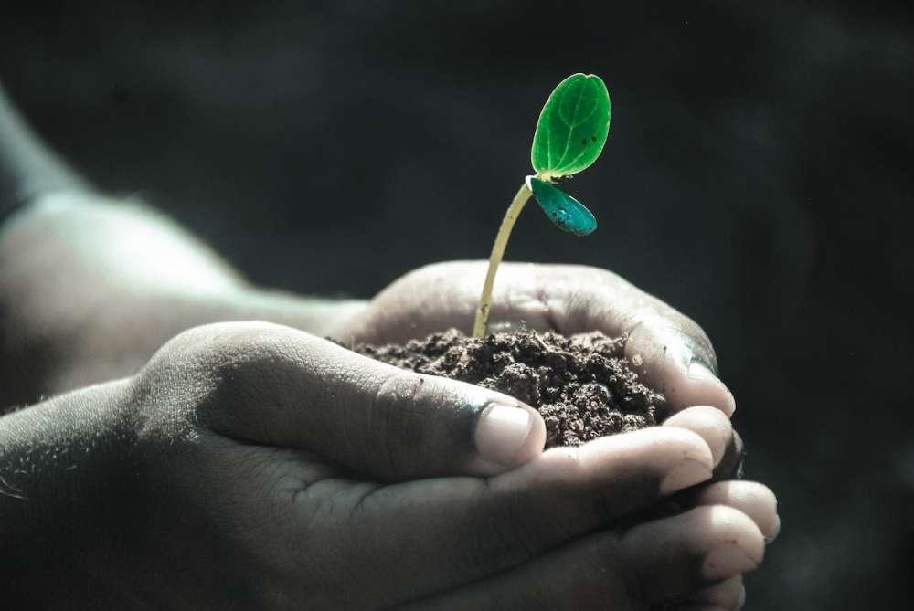 Эксперты: регенеративное сельское хозяйство — ключ к обеспечению будущего продовольственного сектора